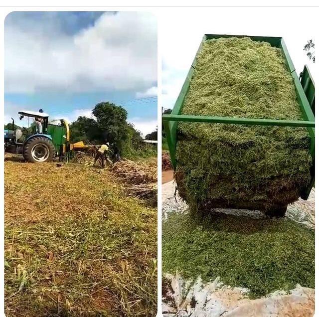 Read more about the article Apoio a Agricultura Familiar não pode parar