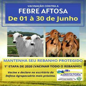 Read more about the article Vacinação contra Febre Aftosa